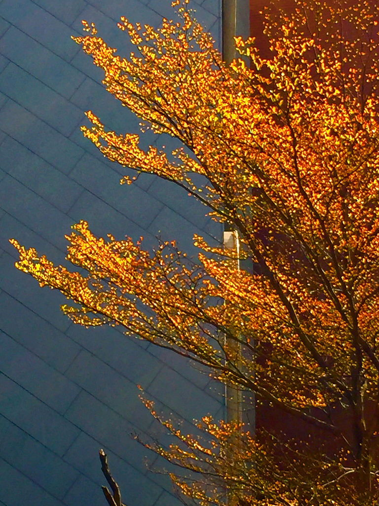 金色的樹.jpg2.jpg