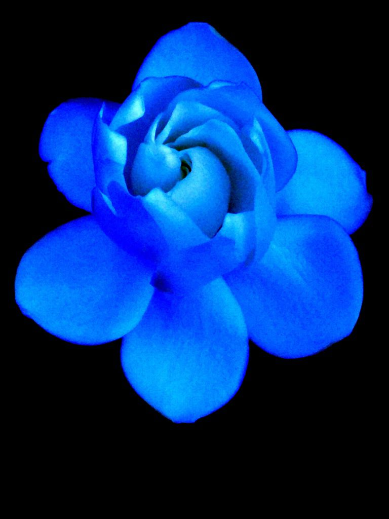 從水星飃落的花.JPG