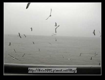 海鷗.jpg