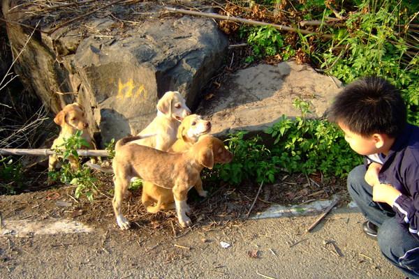 4隻可愛的小狗