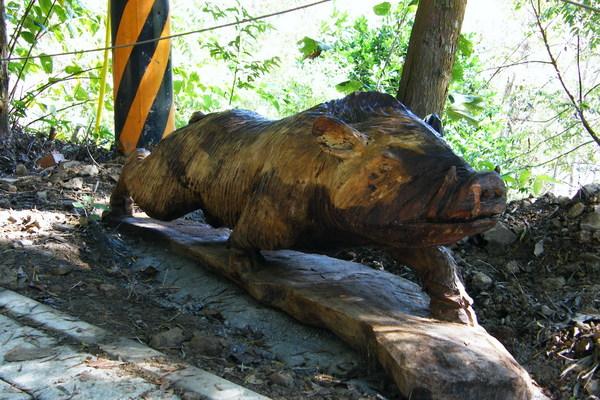 瘦長型的山豬