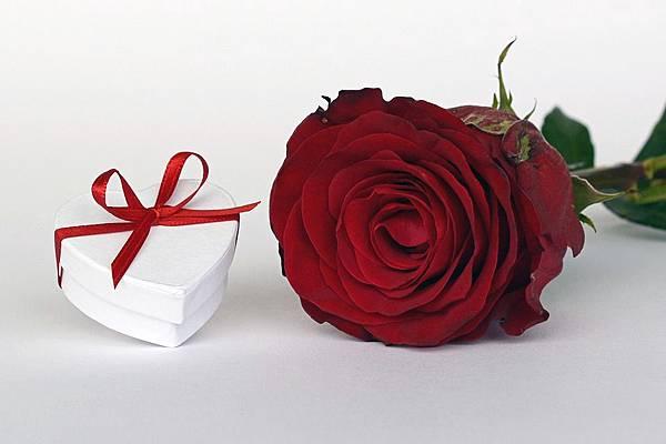 rose-9692_960_720