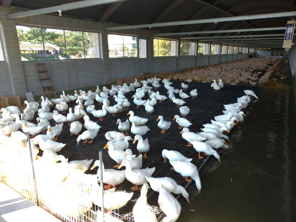 宜蘭農牧場