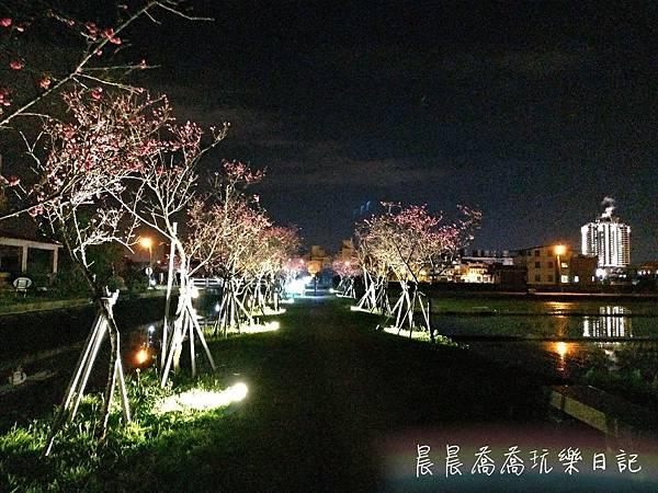 羅莊櫻花步道