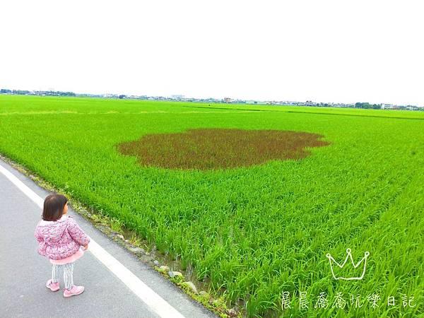 宜蘭伯朗大道稻間美徑