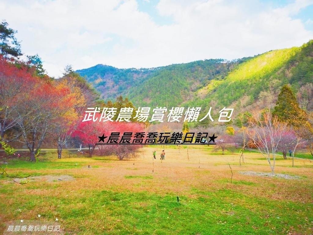 武陵農場賞櫻