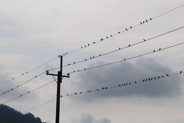 鳥兒的聚會