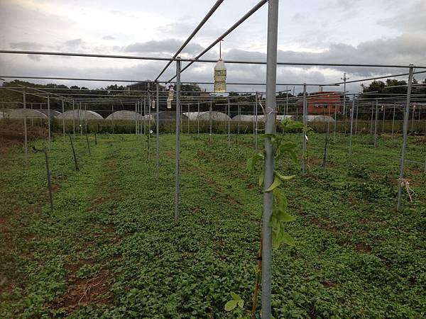 剛種下百香果苗的棚架103.11.14