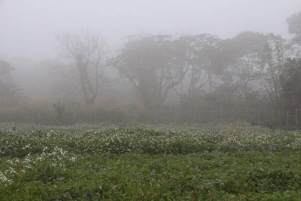 煙雨中的樹林