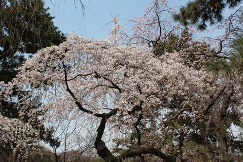 京都御苑01