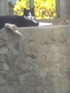 0813慵懶的貓兒.jpg