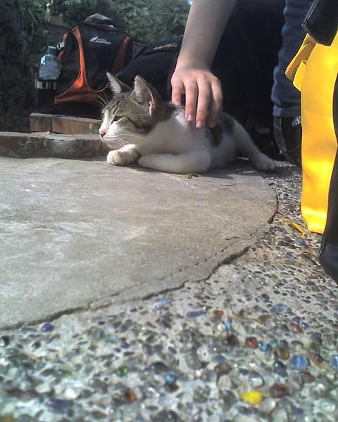 0813會主動來蹭人的貓咪.jpg
