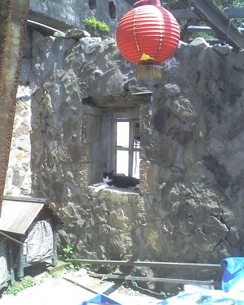 0813猴硐貓兒與燈籠.jpg