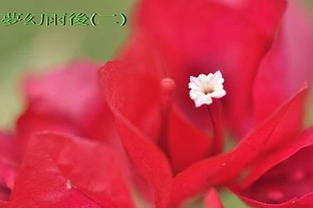 DSC_0924-封面