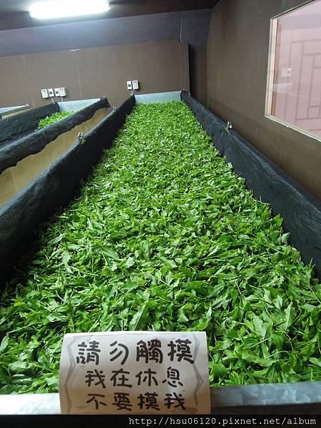 2-廖鄉長紅茶故事館 (24)