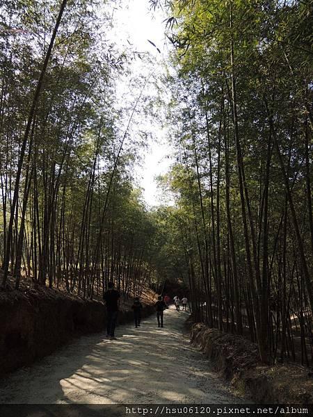 2竹山天梯 (19)