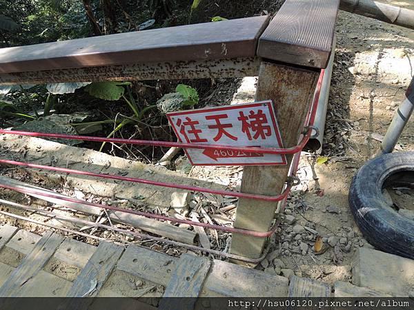 2竹山天梯 (24)