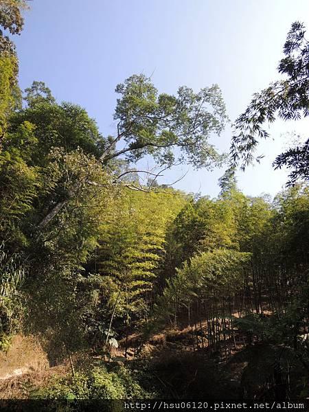 2竹山天梯 (62)