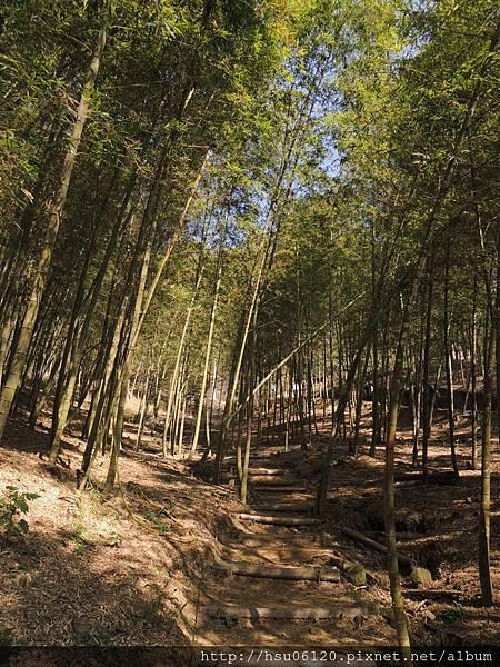 2竹山天梯 (67)