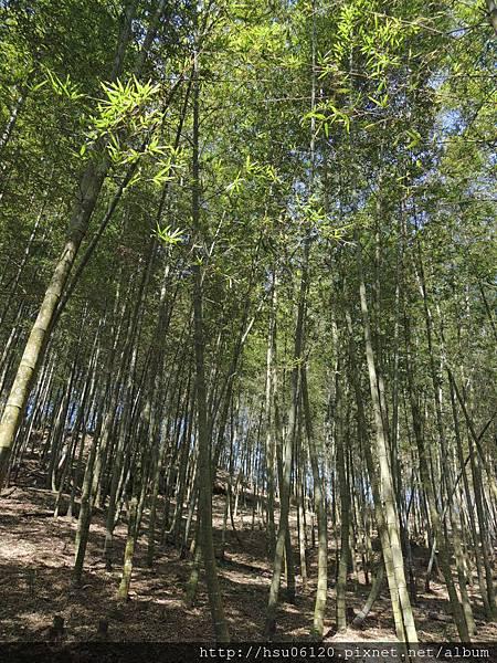 2竹山天梯 (68)