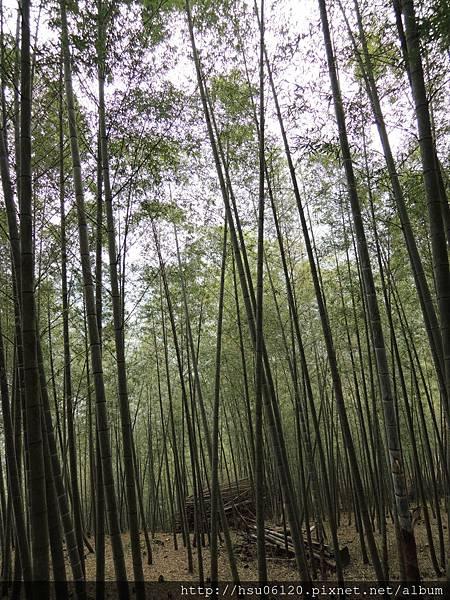 2孟宗竹林遂道 (6)
