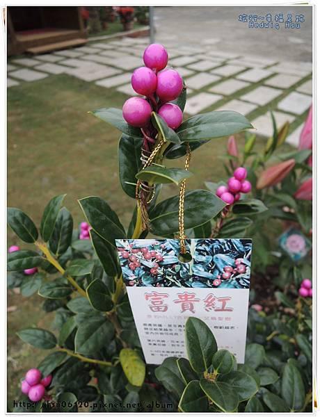 3草屯九九峰民宿 (20)-2