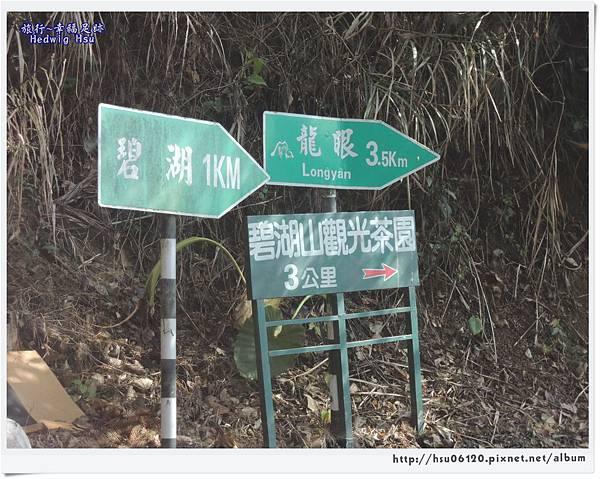 10碧湖山觀光茶園 (2)-1