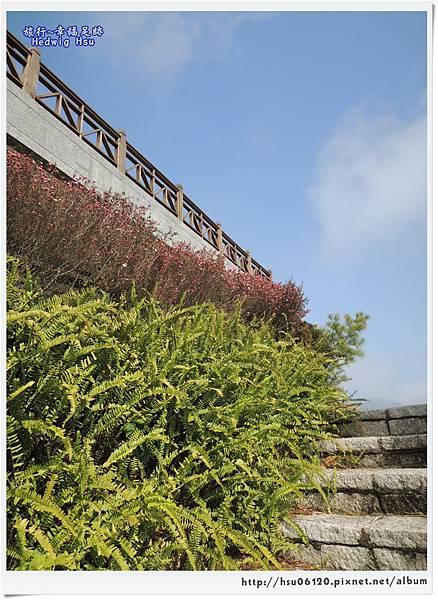 10碧湖山觀光茶園 (14)-8