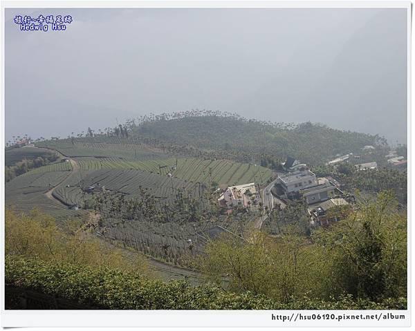 10碧湖山觀光茶園 (27)-21