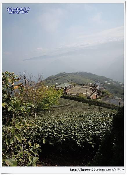 10碧湖山觀光茶園 (35)-6