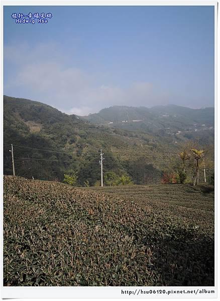10碧湖山觀光茶園 (33)-4