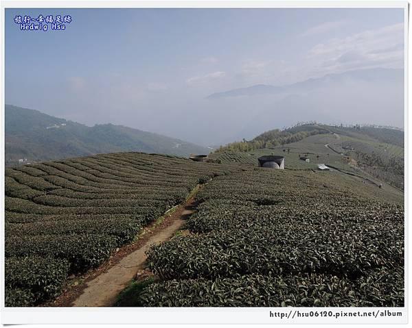 10碧湖山觀光茶園 (55)-35