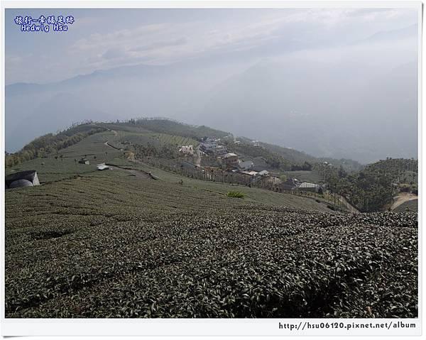 10碧湖山觀光茶園 (56)-36