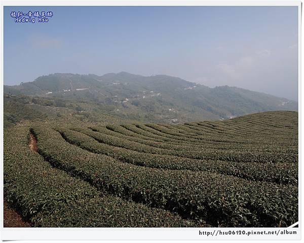 10碧湖山觀光茶園 (53)-34