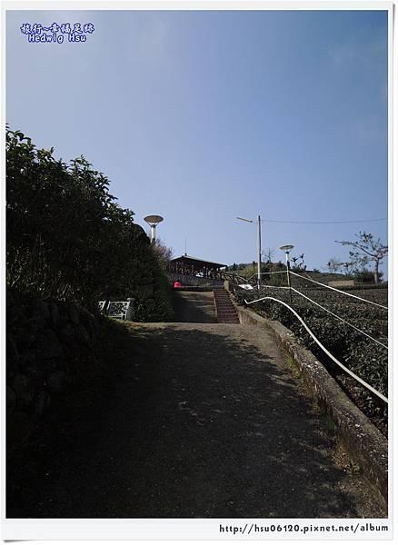 10碧湖山觀光茶園 (61)-11