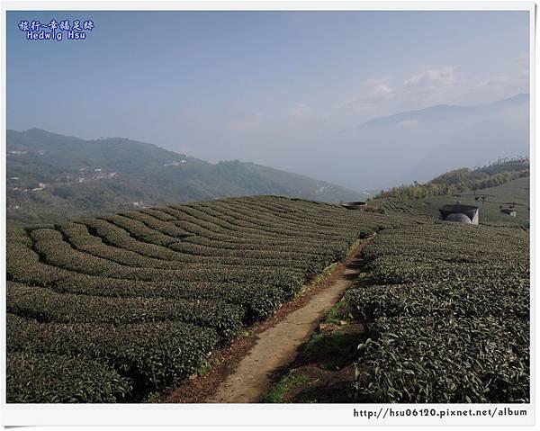 10碧湖山觀光茶園 (60)-39