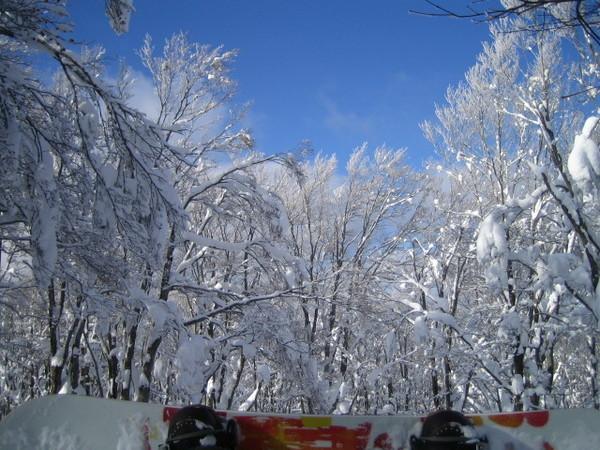 八甲山無敵雪景