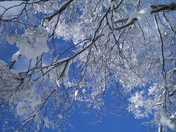 雪白色的樹枝