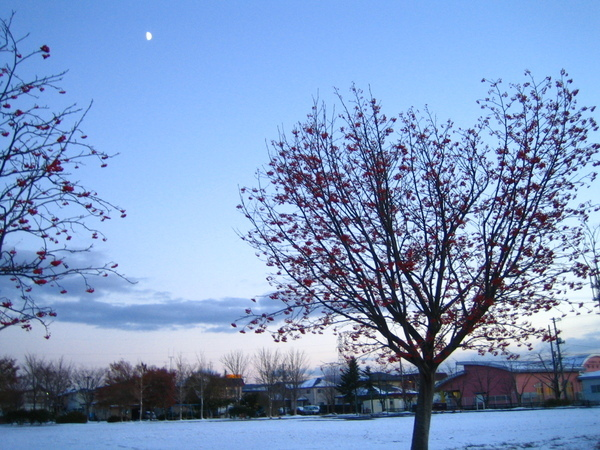 附近小公園的雪景