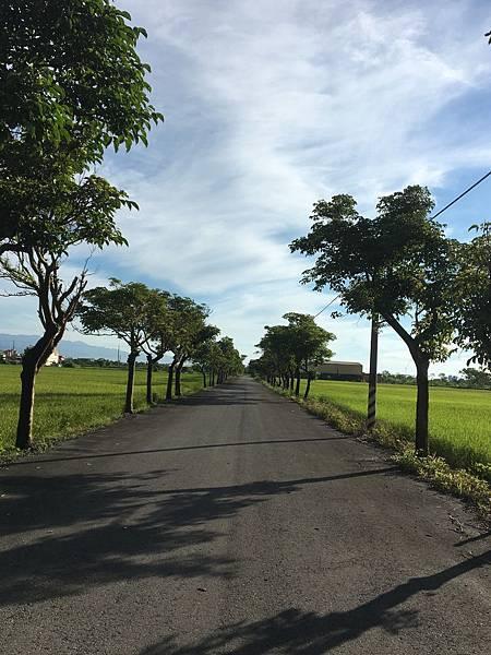民宿前的鄉間小路
