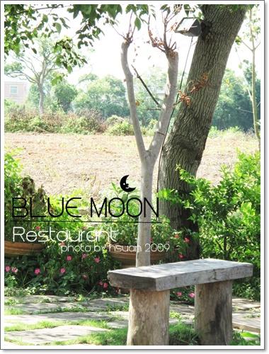藍月樹下.JPG