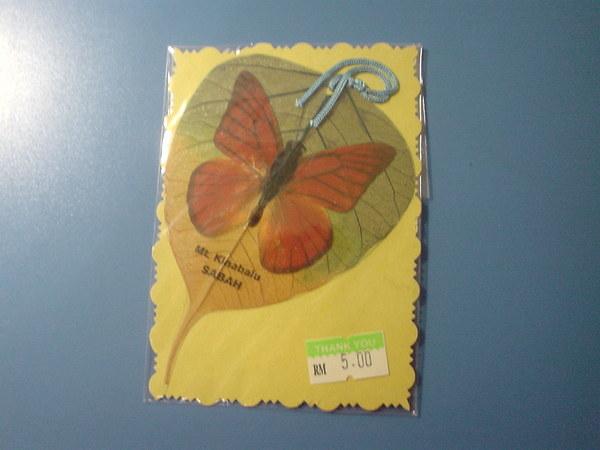蝴蝶+葉脈標本