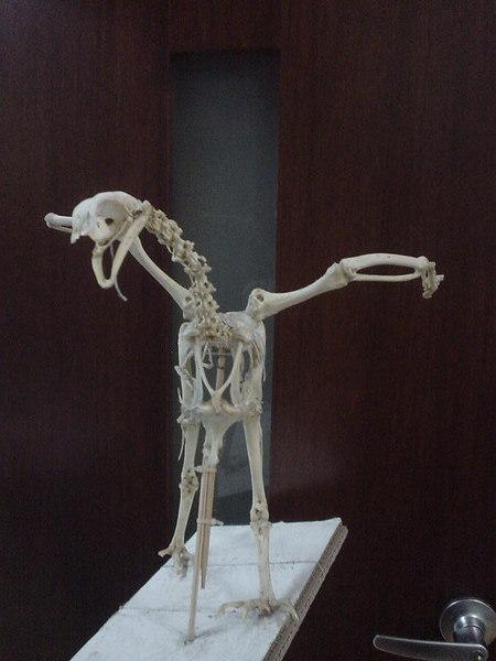 殘破不堪的雞骨頭標本