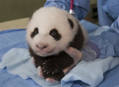 panda-health-exam_chan-400x293