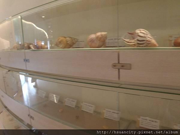 貝殼博物館 (5).jpg
