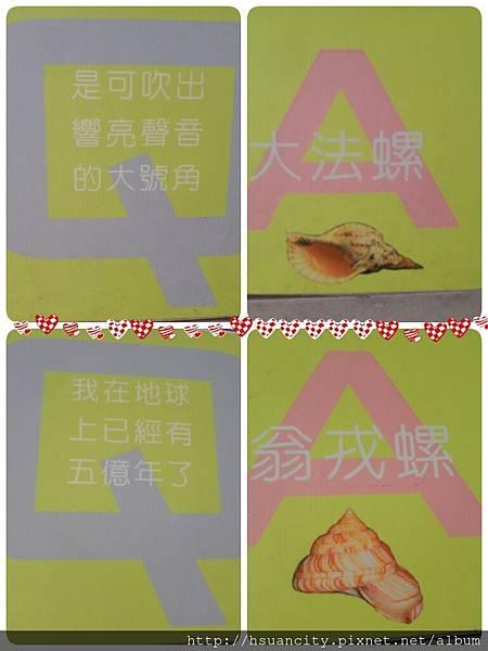 貝殼博物館 (9).jpg