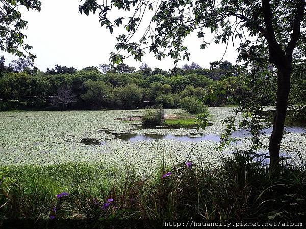 鳥松濕地公園6