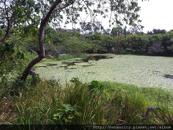鳥松濕地公園7