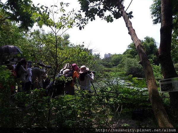 鳥松濕地公園11