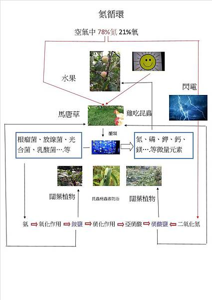 氮循環_部落格.jpg